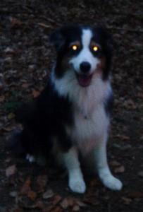 Mein Hund mit Photonen Blick