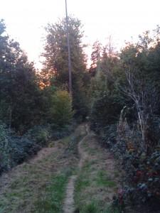 Schurwald Spaziergang
