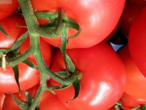 Tomaten für den Salat